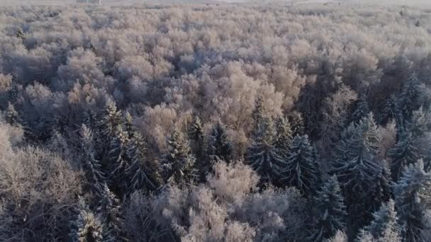Winter forest. View from above. Winter landscape. Coniferous and deciduous trees in frosty weather. trees in frost