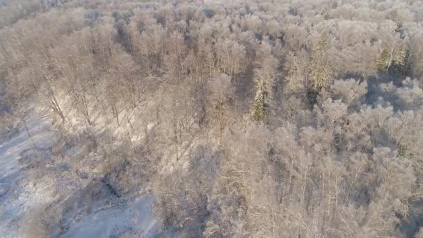 Zimní les. Pohled shora. Zimní krajina. Jehličnaté a listnaté stromy v mrazivém počasí.