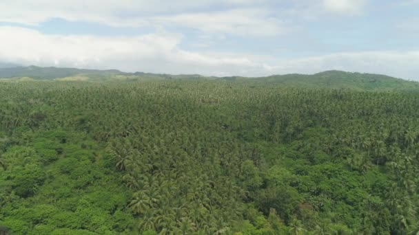 Tropical landscape with palm trees. Philippines, Luzon. Jungle and hills, view from above.