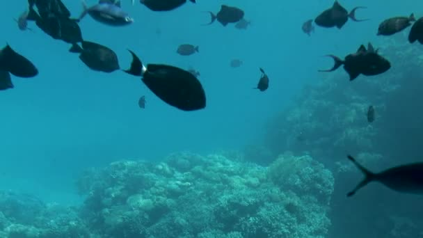 Underwater life in the ocean. Tropical fish on coral reefs