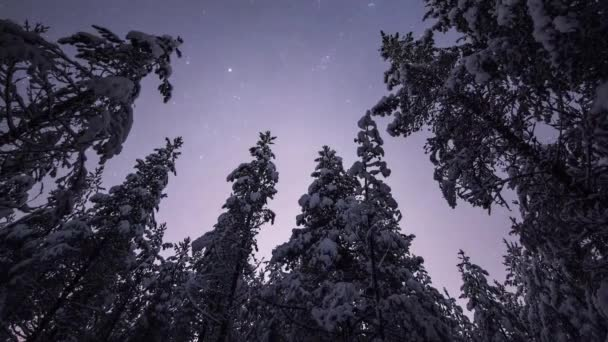 The Night The Starry Sky in Winter. Winter Forest in Finland. in the Sky Flying Stars. Trees Covered With White Snow.
