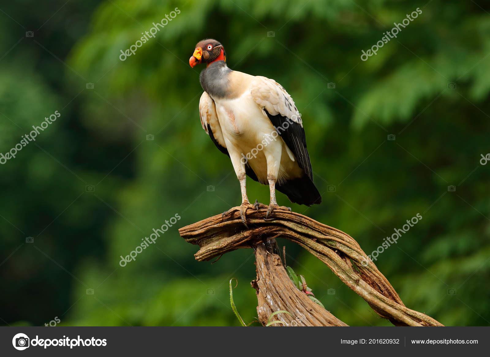 Μεγάλο πουλί