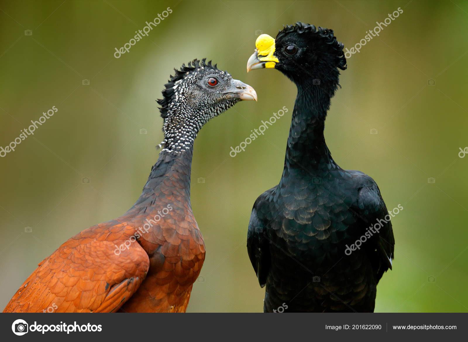 Jak velké jsou ptáci