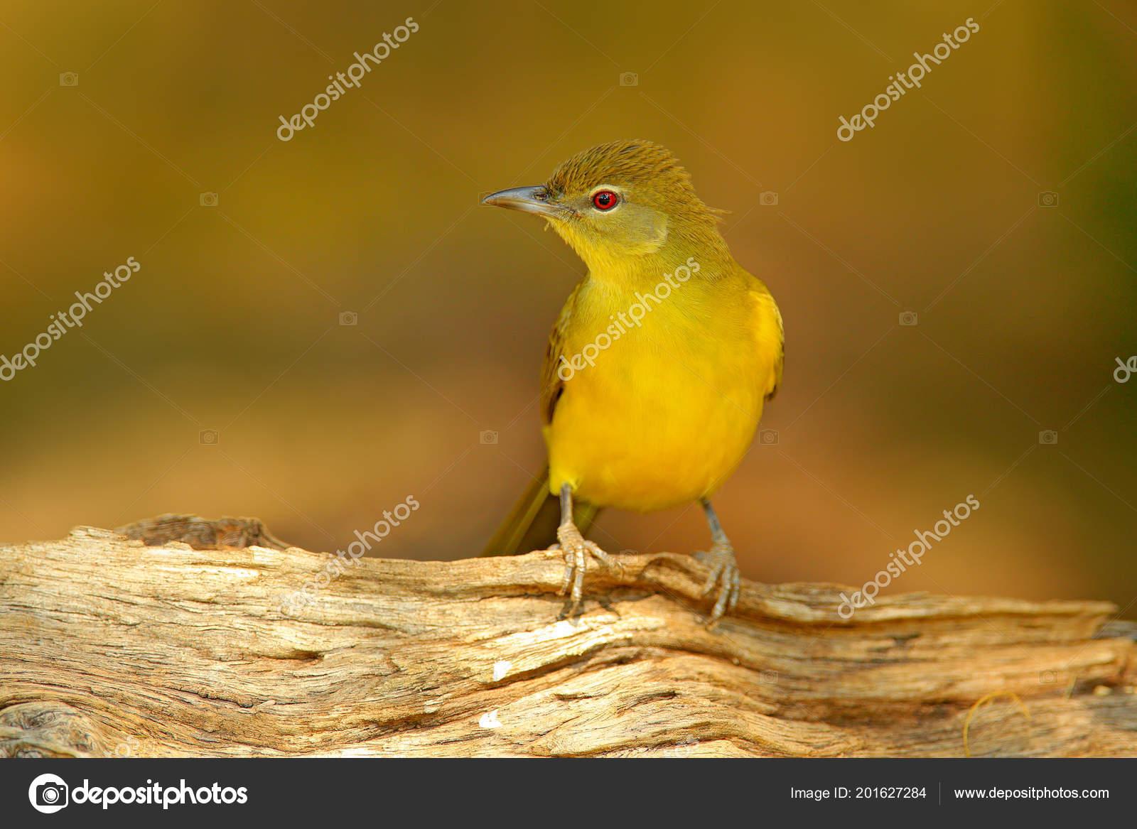 Γυναικείος οργασμός στο πουλί