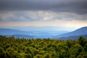 Krkonose mountain, pine forest with clouds. Forest landscape, summer storm, Czech Republic, central Europe.
