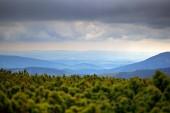 Krkonoše hory, borovice lesní s mraky. Lesní krajina, letní bouře, Česká republika, střední Evropa