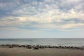 Fényképek Tömítések kolónia a kavicsos bech. A táj, a felhők, Dune sziget, Németország, Európa állat. Tengervíz tömítések