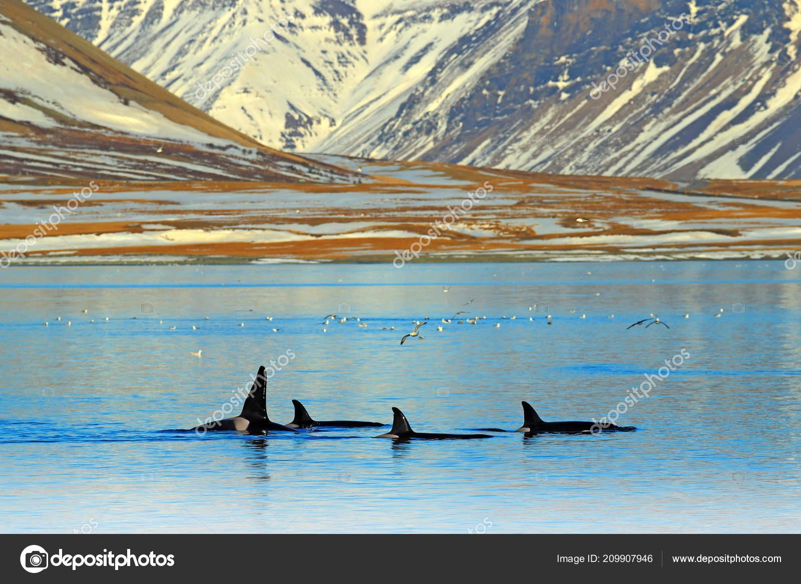 Гифка животные снег дельфин гиф картинка, скачать анимированный.