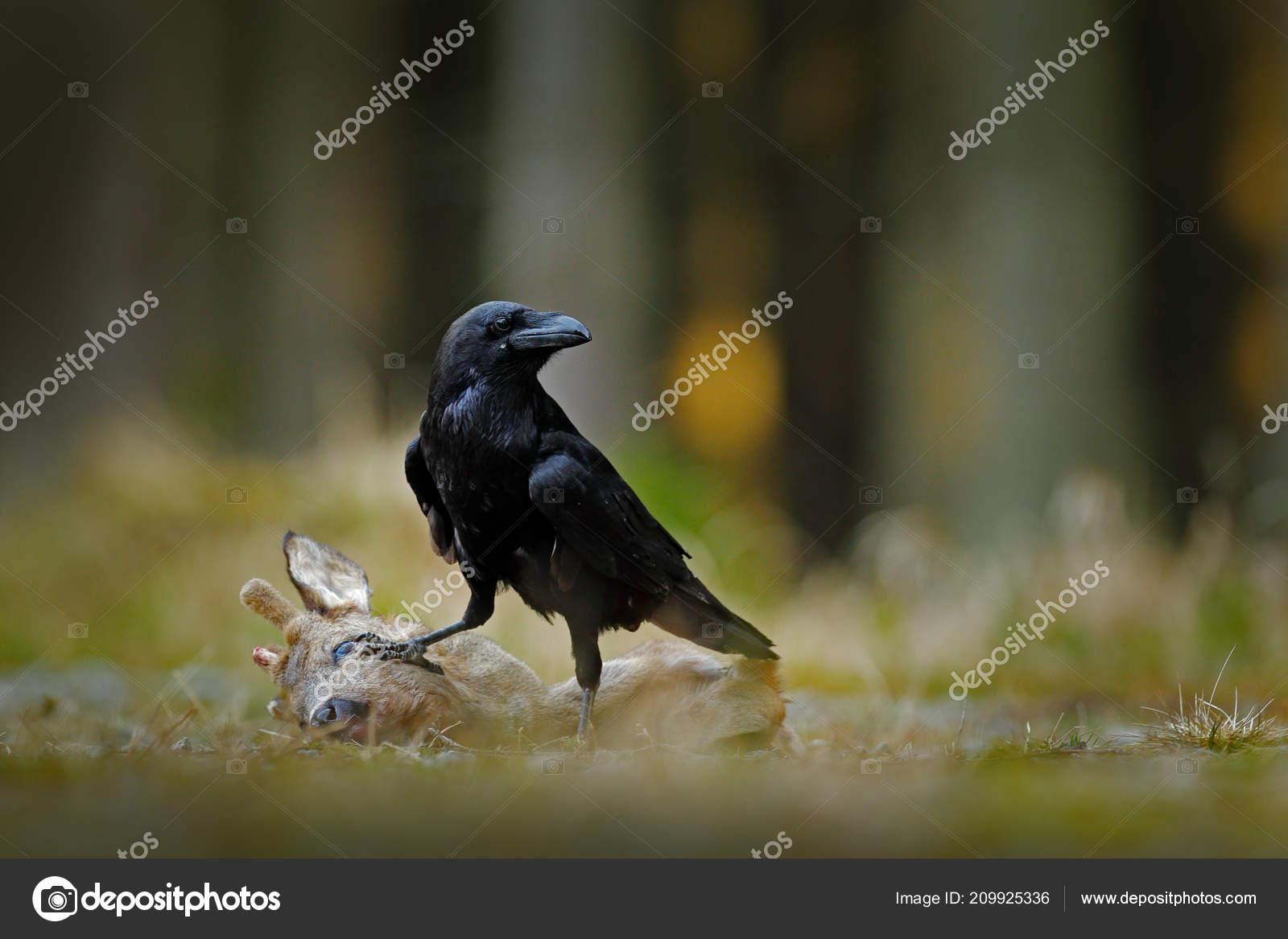 μεγάλο πουλί στα Ισπανικά