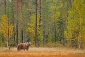 Fotografie Mít skryté v lese žluté s vysokými stromy