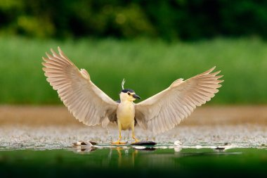 Cute bird with with outstretched wings on river band