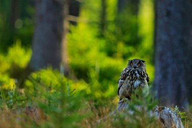 Owl sitting on old tree trunk between trees in forest