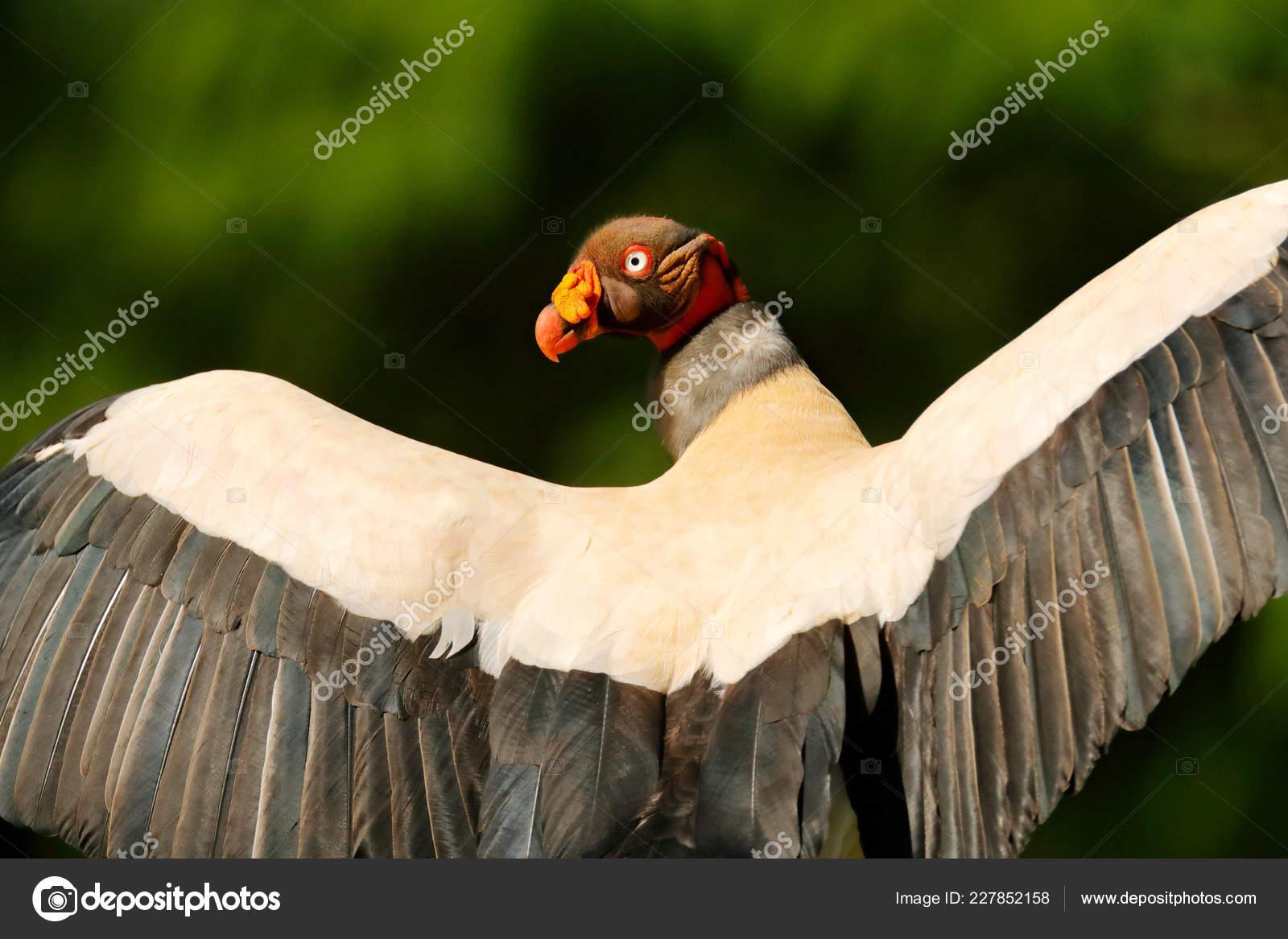 τρομακτικό μεγάλο πουλί καυτό πορνό βιδιές