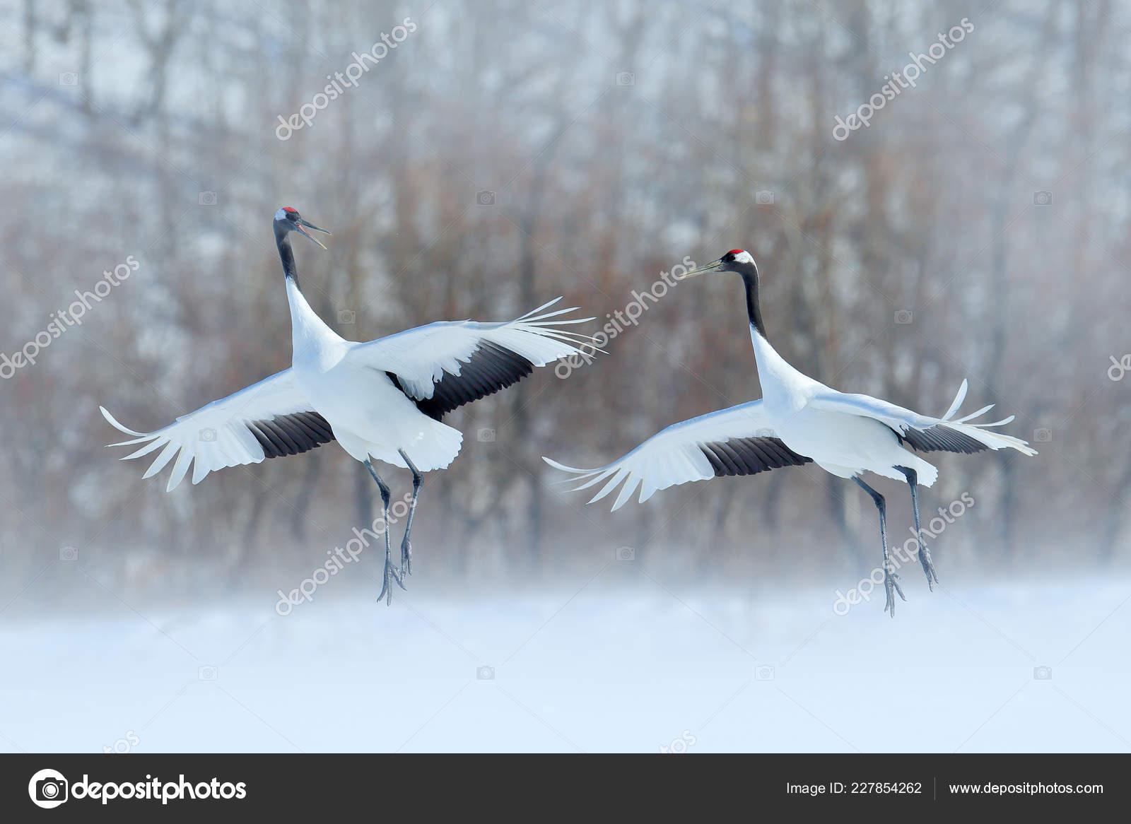krásné muže s velkými ptáky nejlepší videa z celebrit