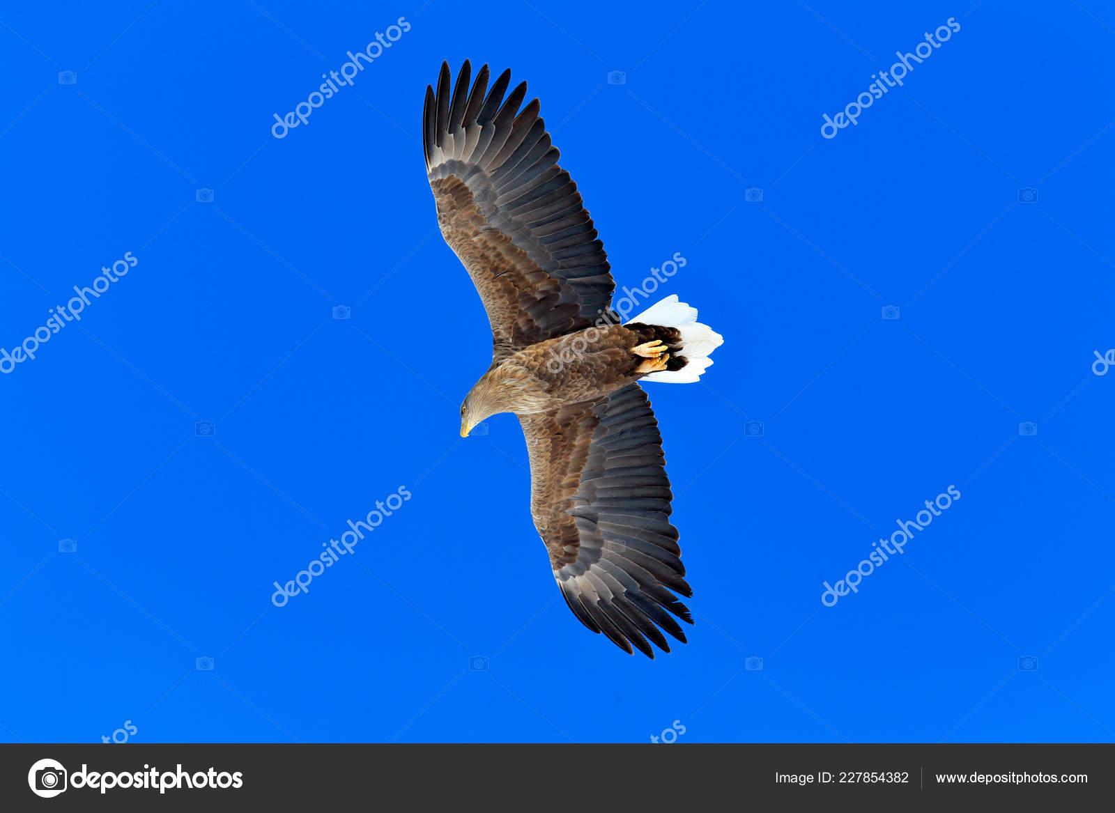 μεγάλο πουλί σε δράση