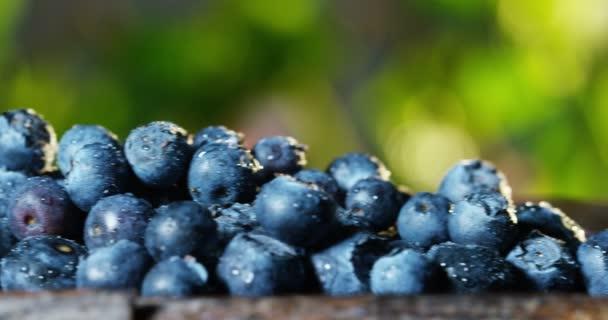 nagyon szoros makró friss áfonya és a-vitamin-antioxidánsok. koncepció a friss és egészséges természet az erdőben. Fa a friss gyümölcs összetétele és a fekete áfonya és az öregedés elleni hatóanyagok.