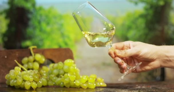 sommelier in vineyard pouring italian white wine in glass in slow motion