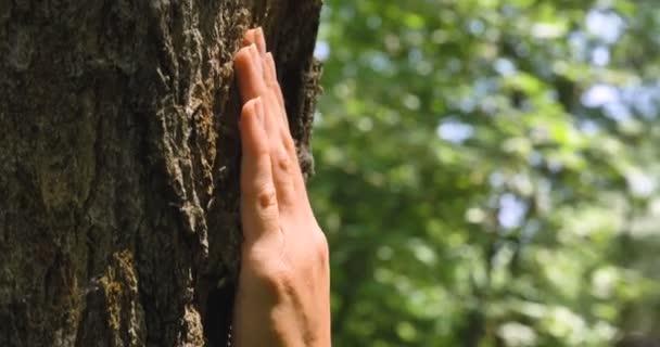 Za slunečného dne, stromu s kůrou, lidská ruka dotkne strom, dlouhé větve, zelené listy. Koncept: vytrvalá rostlina, stromy, uložte planetu, živé rostliny, kořeny života, energie, čakry.