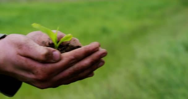 částečný pohled, zpomalené video osoby ruce držící zem půdy s rostoucí malé rostlin