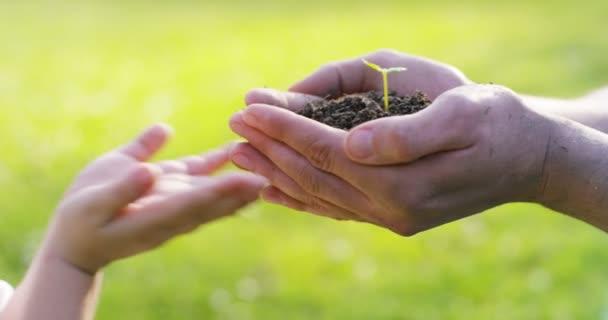 částečný pohled, zpomalené video osoba plná pálivých papriček zem půdy s rostoucí malé rostlin a dávat do rukou dítěte