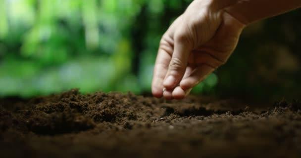 zpomalené video osoby výsadbu semen v půdě hnědé půdy