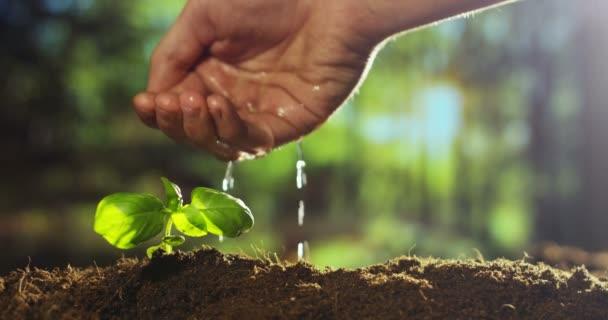 částečné zobrazení video, zpomalené video osoba ruky zalévání, rostoucí malé rostlin v terénu pozemku