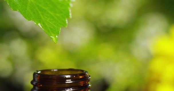 vízcseppek, illatok és illatok aromaterápia-wellness és spa illóolajok keveréke. szépség fogalma. illatos illóolaj. csepp lényege az egy levél esik medence, a wellness-központ