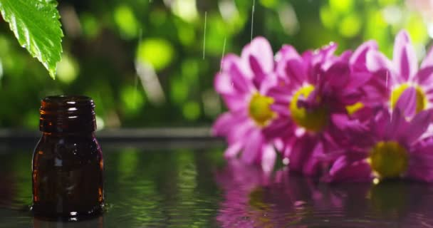 blend of essential oils with water drops, scents and aromas in aromatherapy for wellness and spa. concept of beauty. fragrant essential oil. essence drops fall from a leaf into pool in wellness center