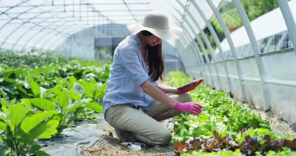 A beautiful girl in a straw hat and wearing rubber pink gloves, working with a tablet, in a greenhouse. Concept: bio products, natural products, fresh, delicious, fruits, vegetables, grow water plants