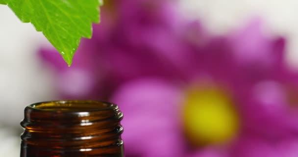 směs éterických olejů s čůrky, plné vůně a chutí v aromaterapii pro wellness a spa. pojetí krásy. vonné silice. esence kapky padají z listu do bazénu ve wellness centru