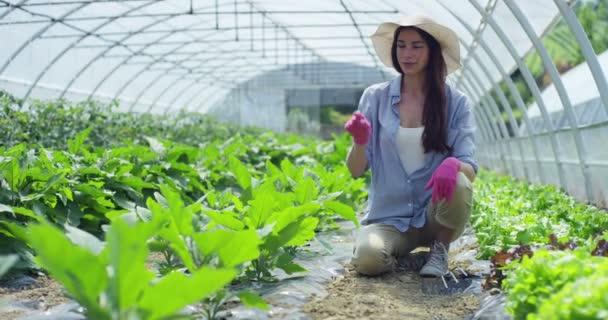 videó a mezőgazdasági termelő nő a mezőgazdasági zöld ház növekvő növények, mutató ujját a virtuális gomb 100 százalékkal bio