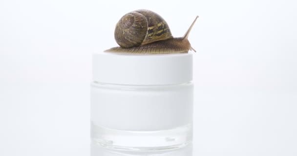 Close up, of a snail, streaking towards a jar of skin cream. Concept of: Moisturizing cream, perfect skin, snail snack.