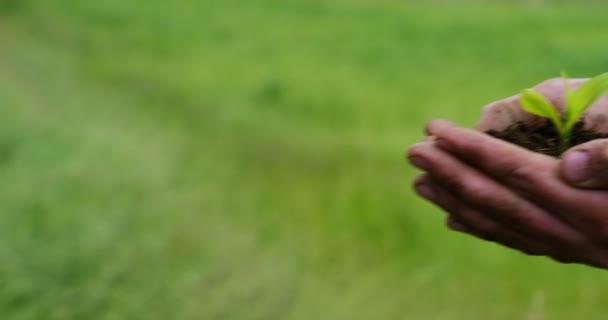pomalý pohyb obrazu osoby držící půdu pod nohama s rostoucím rostlinným zařízením