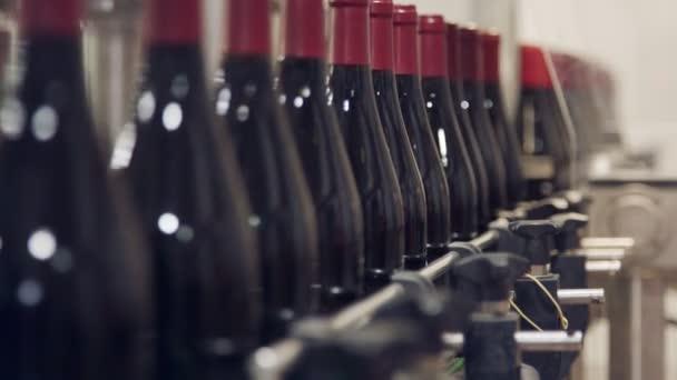 Rotweinflaschen auf einem Förderband in einer Weinabfüllanlage.