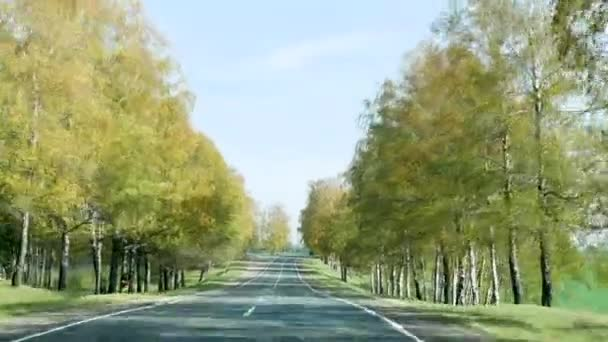 autumn road for cars driving among the trees in Belarus