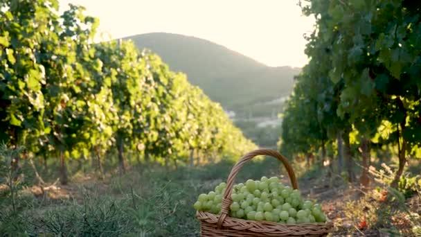 szőlő kosár szőlő áll a földön