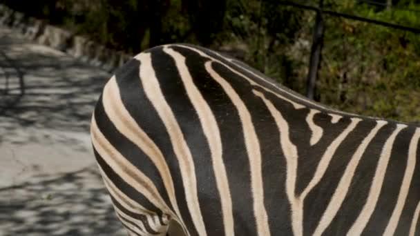 egy afrikai zebra feje áll az állatkertben