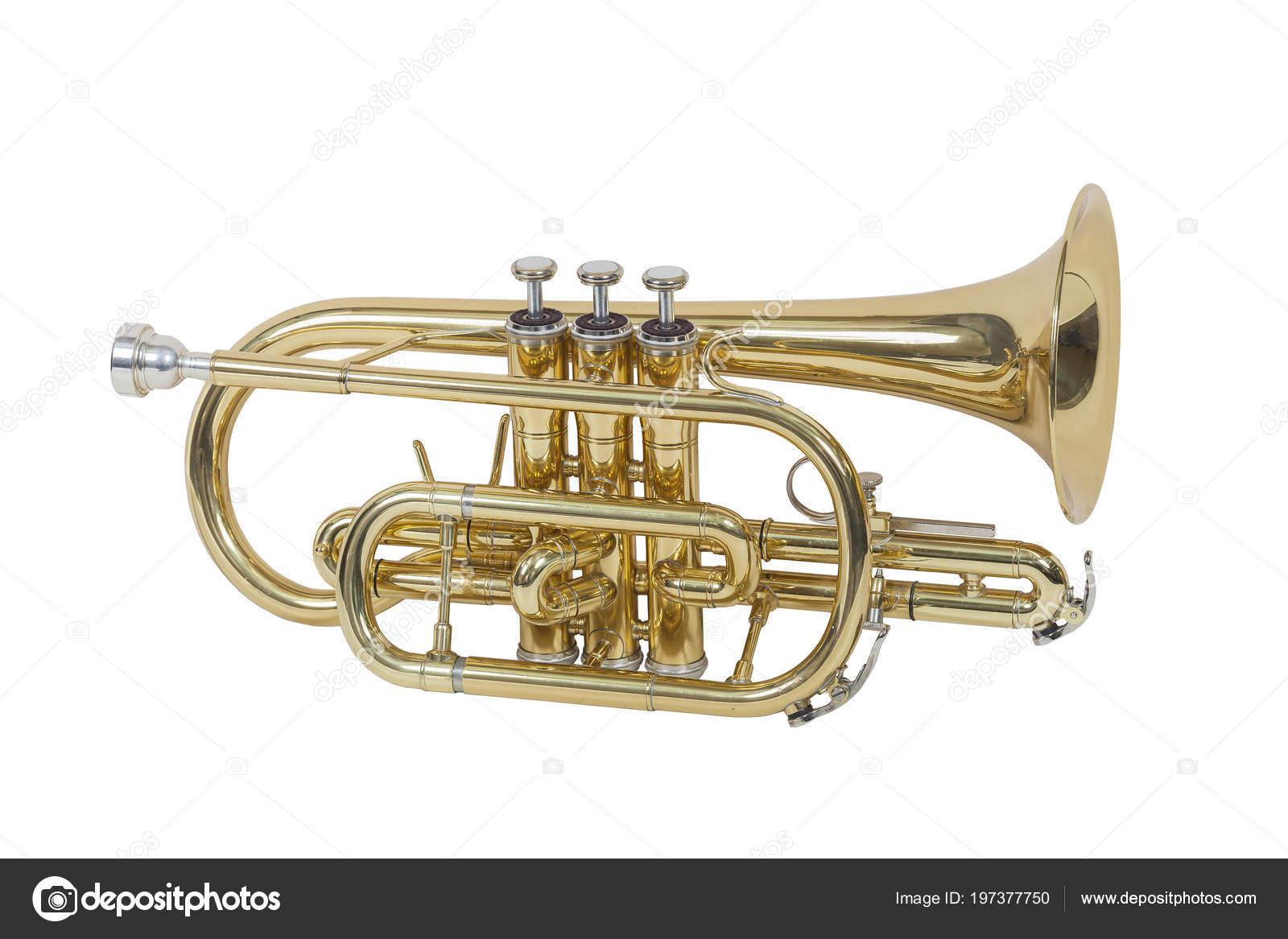 Cornet Instrument Musique Classique Vent Isolé Sur Fond