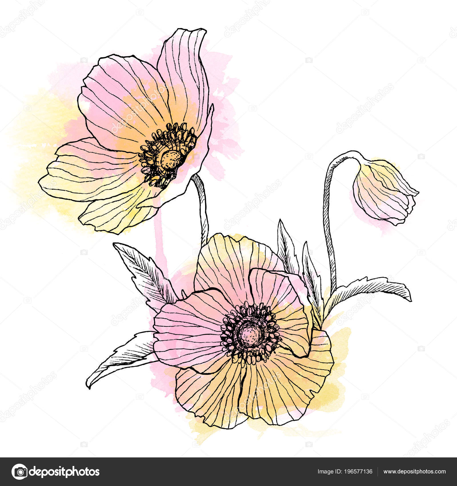Anemone flower linear drawing bouquet wild plant with watercolor vintage anemone flowers wedding flowers bundle can use for greeting cards wedding invitations patterns photo by ledepictail izmirmasajfo