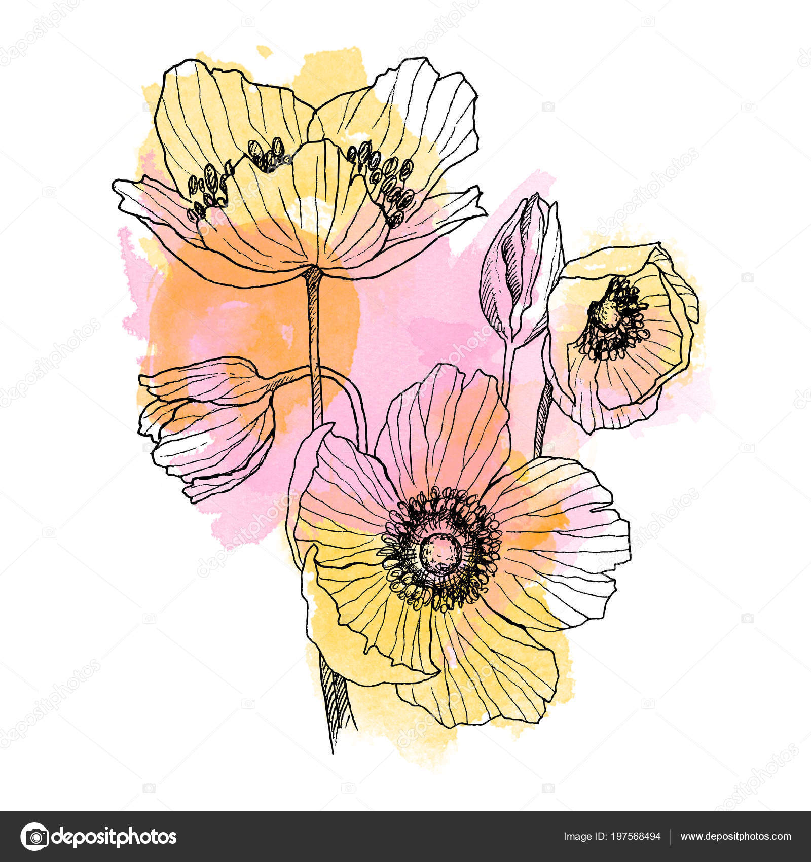Anemone flower linear drawing bouquet. Wild plant with watercolor ...