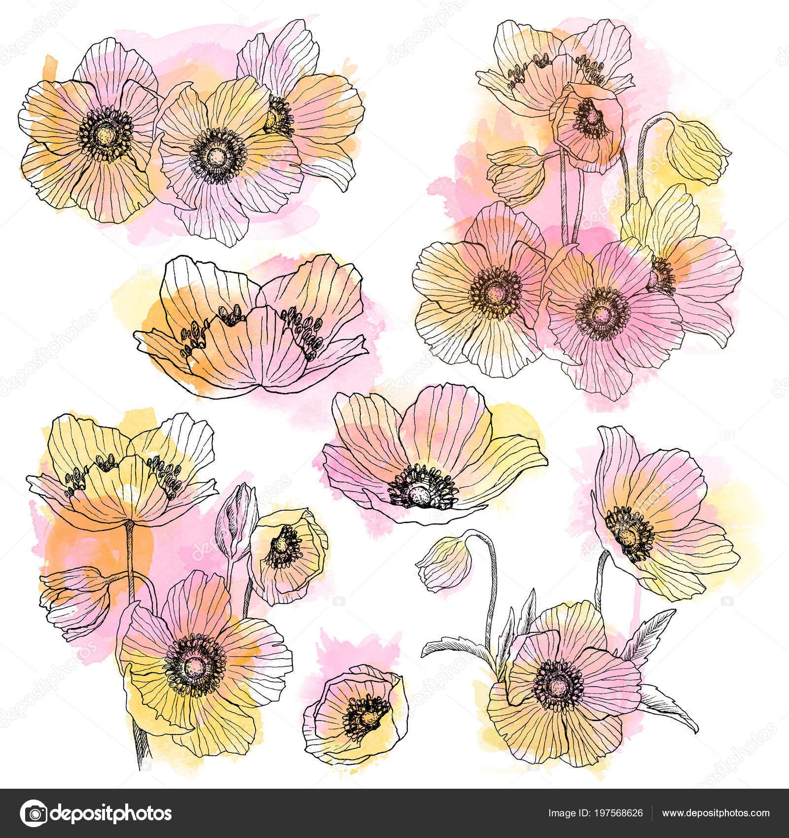 Anémone Fleur Linéaire Bouquet Ensemble Du Dessin Plante