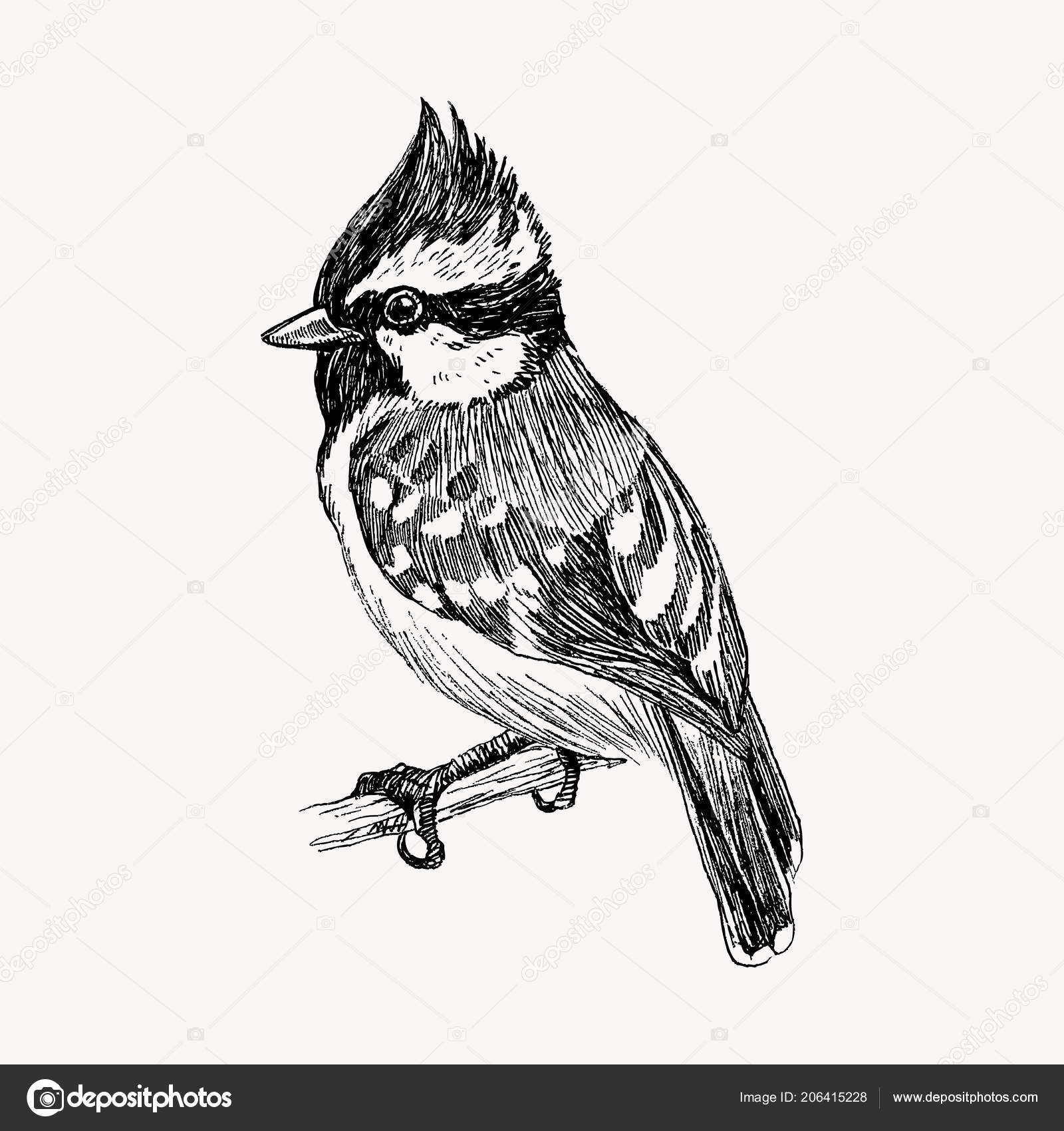 Vector graphic hand drawn bird on retro graphic style  Ink
