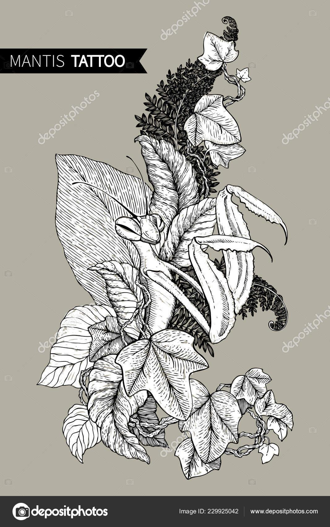 Imagem Gráfica Decorativa Do Mantis O Desenho Linear