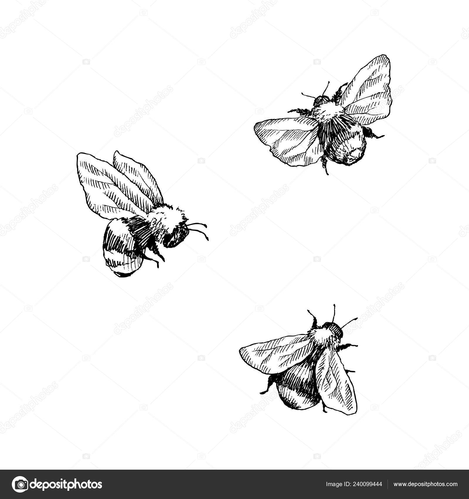 Sketch of bumble bee | Bumblebee set  Hand drawn vector