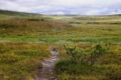 hdr Bild der Landschaft im Skaarnja Naturschutzgebiet in Schweden