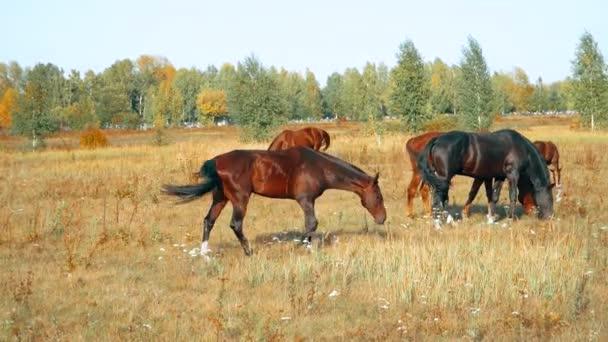 Pferde grasen draußen im herbstlichen Feld