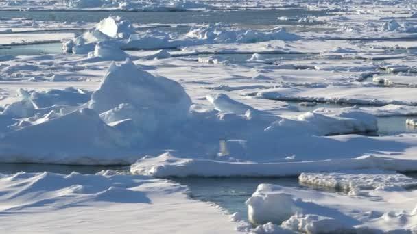 Blaues schmelzendes Eis, das im Wasser treibt. Möwen fliegen und fischen. Polartag in der Arktis.