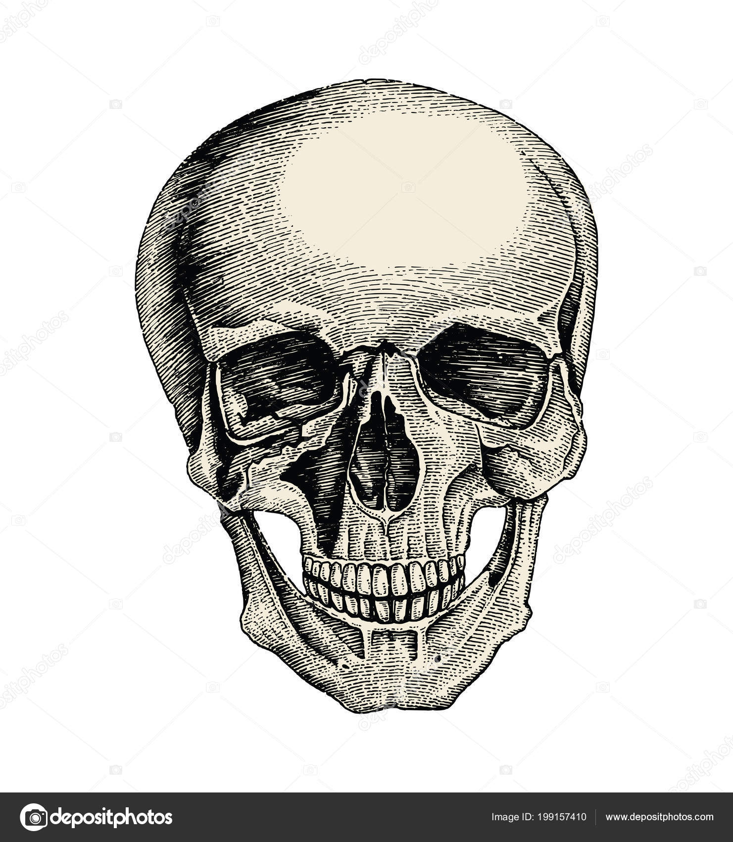Cráneo Humano Dibujo Vintage Estilo Anatomía Del Cráneo — Foto de ...