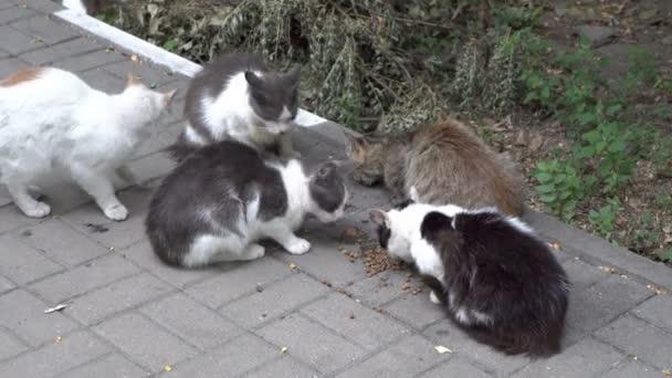 Skupina bezdomovců, barevných koček, kteří jedí jídlo venku na dvorku. Rozhlédli se ve strachu. Close-up. Pohled shora. 4k