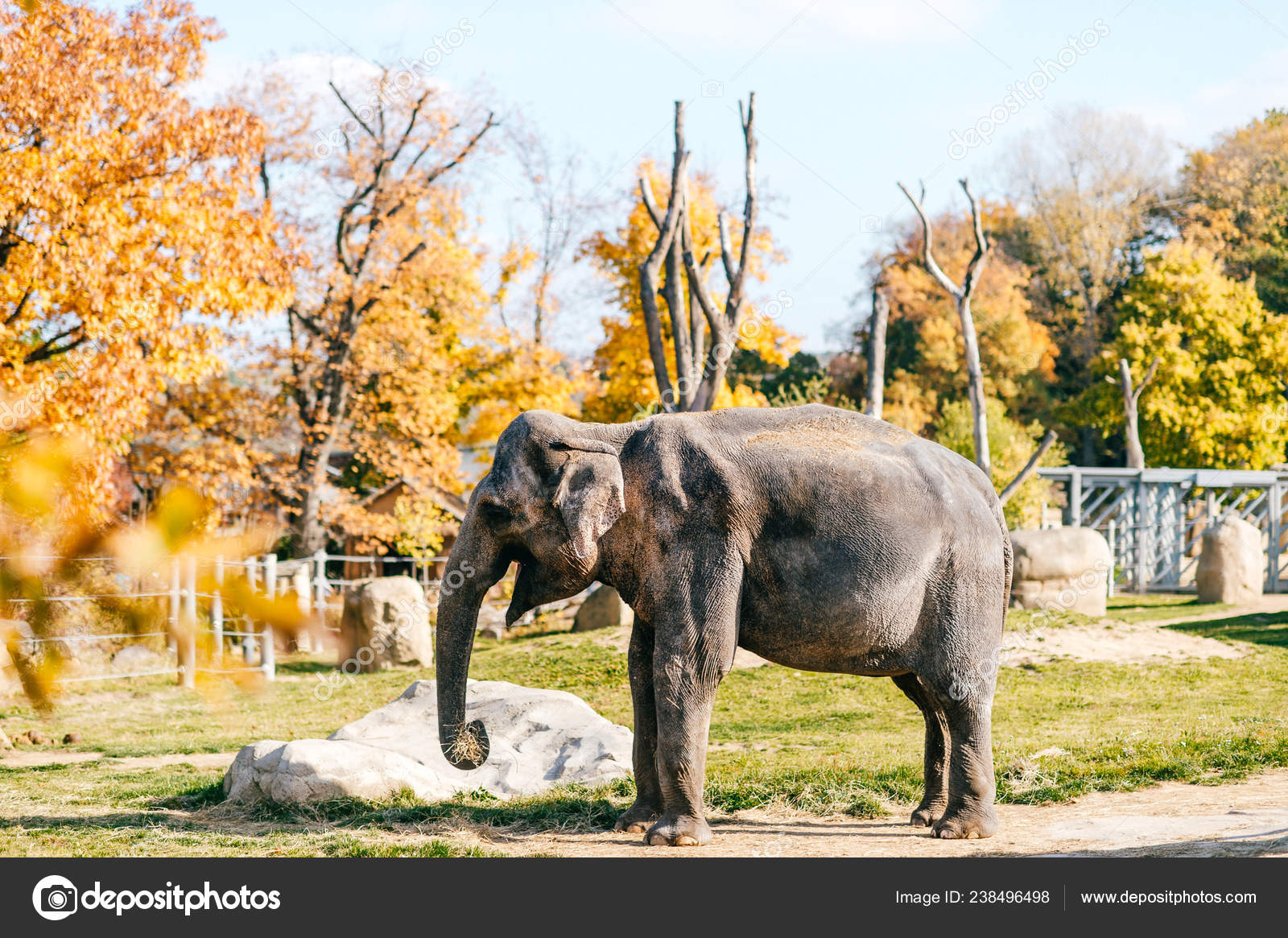 Elephant Natural Habitat Africain Autumn Southern Safari Park Stock Photo C Hplovecraft Mail Ru 238496498